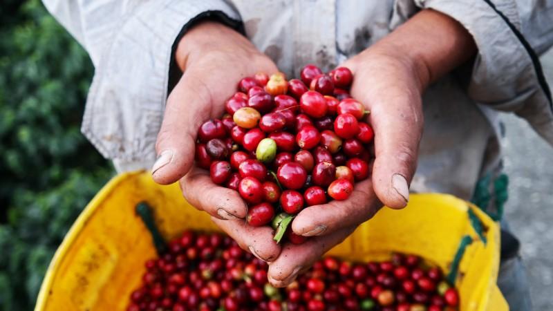 Fairer Rohkaffee aus Kolumbien