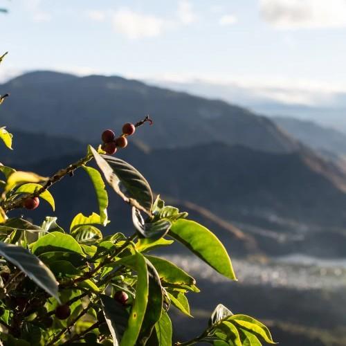 Kaffeeland Guatemala