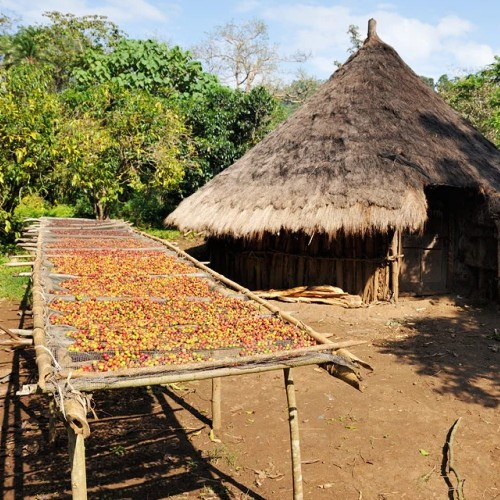 Äthiopien Kaffeeland